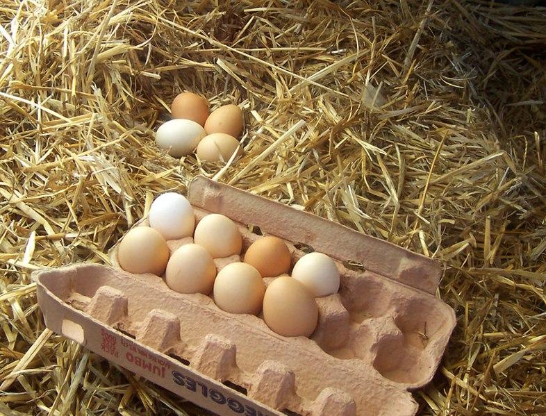 Boîte à oeufs pour Pâques en mode zéro déchet