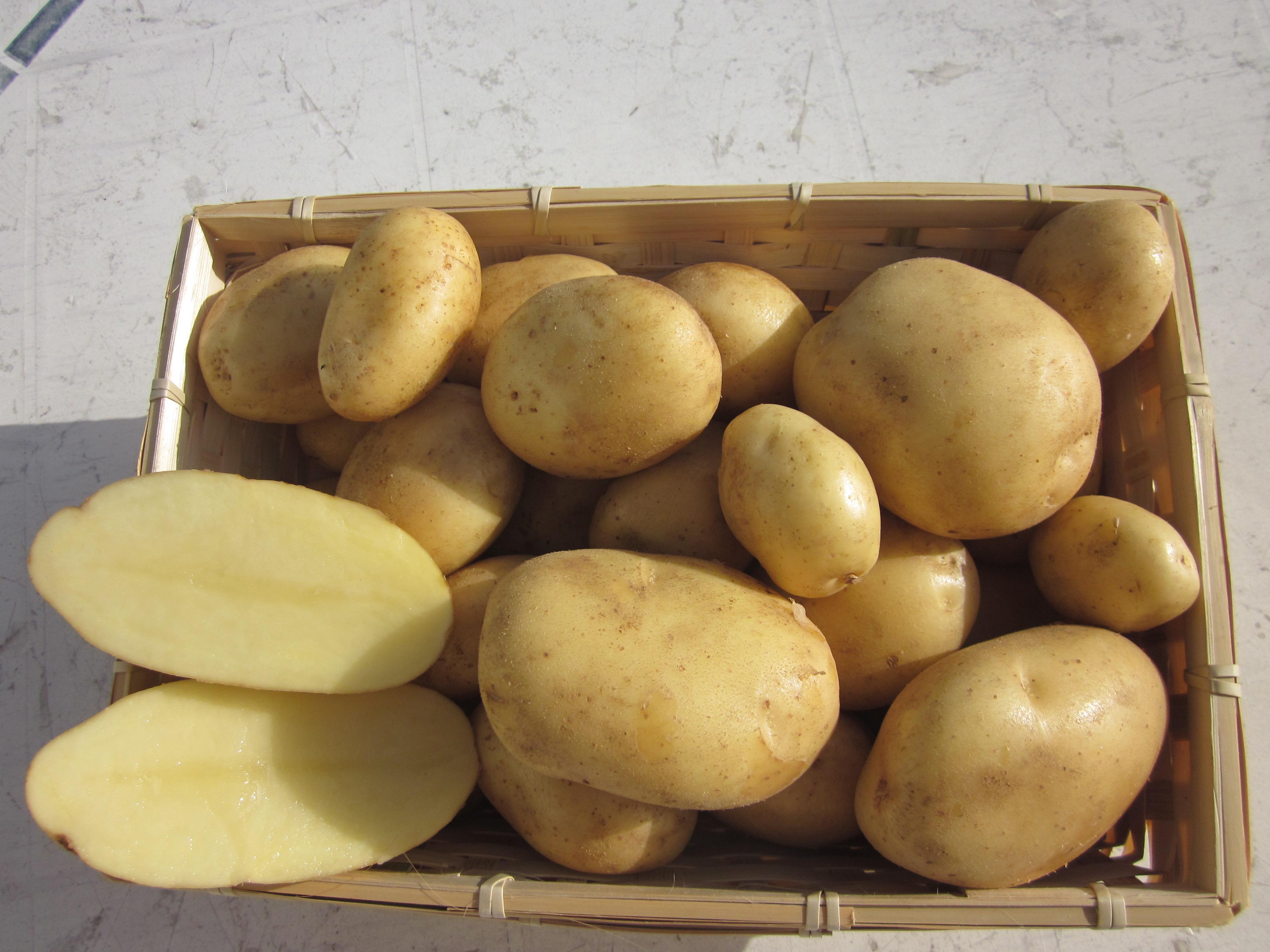 Comment manger les pommes de terre ?